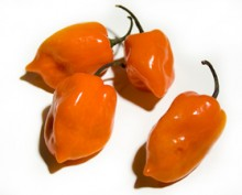 Chilli paprička-Habanero orange / 12 semen